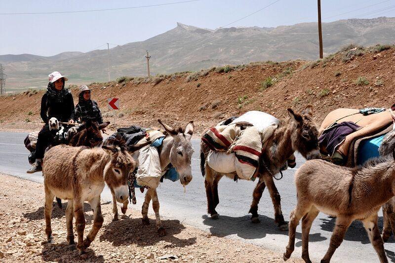 خبرنگاران مراتع میان بند استان های همجوار سمیرم میزبان عشایر شدند