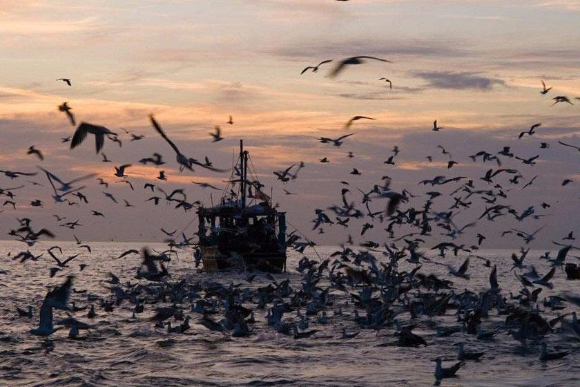 جاهای دیدنی قشم نگین پنهان خلیج فارس