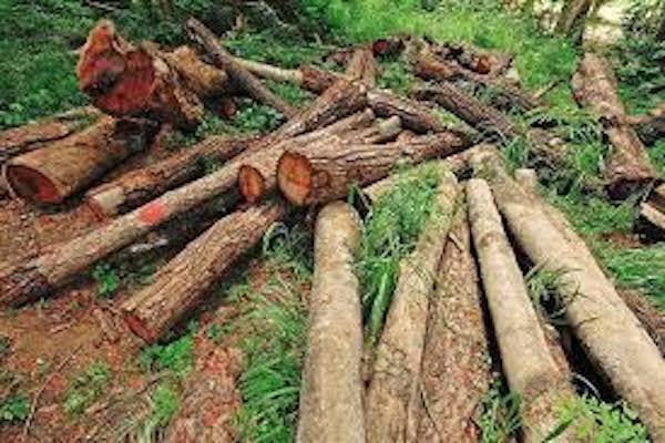 جنگل زدایی عامل افزایش انتقال بیماری ها از حیوان به انسان